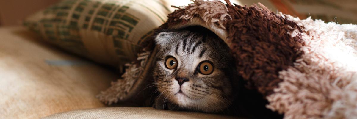 Does curiosity really kill the cat? Photo by Mikhail Vasilyev on Unsplash